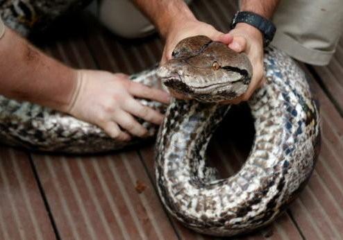 夺命五头蛇的图片