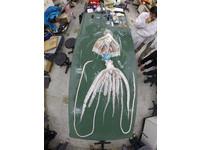 地震要來了嗎? 台首次捕獲「大海怪」4米長大王魷魚