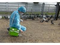 大陸禽流感疫情創5年新高! 「西藏」也爆首例H7N9