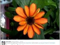 NASA種出第一朵「太空菊花」 放話下次種番茄