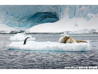 企鵝伸長脖子看直播 眼神騷擾海豹「愛愛」