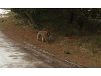 丹麥zoo傳「狗大小狒狒」脫逃 警方po文:千萬別靠近