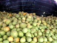 吃柚子排毒瘦身 1天最多吃半顆