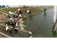 寒流肆虐凍死魚! 國軍派300兵力協助清運83.5公噸