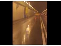 二殯跑出「白鵝」逛辛亥隧道? 志工:很不鼓勵這習俗