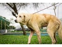 過年期間幫狗狗加菜 巧克力、葡萄、洋蔥、大蒜是禁忌