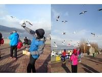 昆明滇池手舉高高餵海鷗 各種尖叫!超怕鳥屎滴下來
