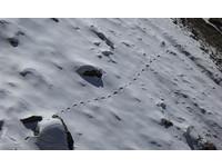 傳說中的雪人? 喜馬拉雅山出現「規律腳印」直線綿延