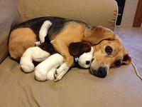 玩偶太破爛被主人丟棄 狗狗卻苦尋「還是最喜歡它!」