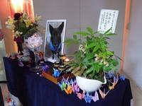 深夜伴女同學走回宿舍 貼心校犬「小黑」葬禮隆重溫馨