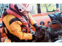 德國牧羊犬追海鷗離家5天 跳下海還游了1.6公里遠