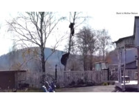 標準見死不救!俄男見鄰居被熊追上樹 只顧在旁拍影片