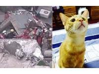小貓咪守護小主人 維冠金龍大樓2男童受困獲救