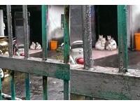 白貓家族疊疊樂取暖 網:這不就最近流行的立體拉花嗎