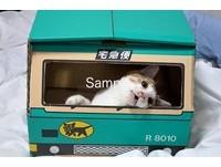 跨海協助美濃大地震 日本攝影師發起「貓咪義援金」