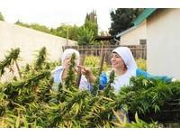 修女也瘋狂?加州山谷姐妹種大麻 讓你嗨上天堂