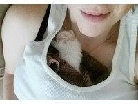 被棄養而沒有安全感 雪白小奶貓最愛窩媽媽胸前睡覺