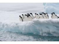 北極熊未來再減3成 南北極海冰銳減面積=整個印度