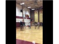影/你一定沒見過 德州籃球比賽居然騎著馬