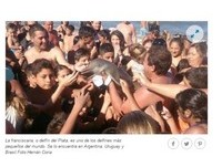沒人性遊客只顧拍照 小河豚脫水熱死阿根廷沙灘上