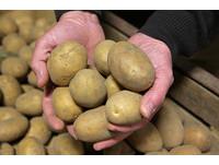 發芽還能吃嗎? 10種食物大公開...「它」營養更豐富