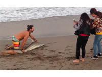 「小黑鰭鯊」棕櫚灘擱淺 被惡男強拖上岸合照1分鐘