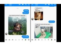 替聊天加分!臉書Messenger打這串密碼 馬上出現可愛動物