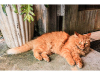 「療癒人類真是辛苦喵~」 日本規定貓咪最高工時