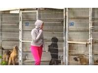 老鼠比狗多...她守護250條生命 買下以色列收容所