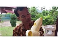 更勝象牙香蕉!巴紐發現25米芭蕉樹 4個人才能吃完1根
