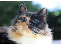 流浪小貓營養不良又失明 但現在牠成了可愛黏人精!