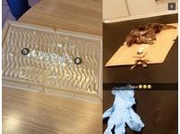 挪威麥當勞放黏鼠板抓麻雀 牠們越掙扎黏越緊最後慘死