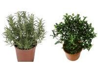 為居家添綠意 量販推植物促銷活動6.6折起