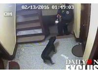 紐約警開槍射殺比特犬 全球15.6萬人連署要求撤職