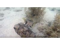 同伴困漁網...小河豚堅持陪在旁 獲救一起開心游走