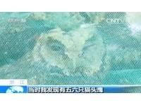 推銷「野味貓頭鷹」給警察 獵到6萬野鳥全放冰箱凍死