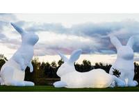 巨型兔子佔領草地 訴說澳洲生態危機