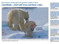 暖化嚴重浮冰融解 北極熊被迫吃掉同類!