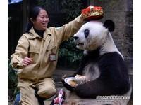 貓熊保育員施飛寧猝逝 全球最老「巴斯奶奶」最黏她