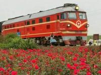 少女花海鐵軌自拍被火車撞飛慘死 目擊者拍下瞬間