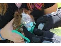 消防員衝進濃煙火場帶出天竺鼠 用狗狗氧氣罩救活牠