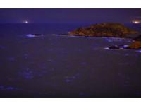 北竿藍眼淚大爆量!絕美縮時攝影 夜戰拍到凌晨4點