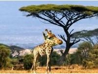 長頸鹿沒脖子長怎樣?就算沒脖子還是超可愛的動物特輯