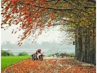 木棉花季來了!彰化最美3處秘境「紅色大道」