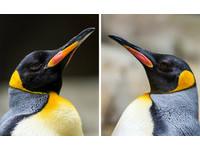 「他們」是同志企鵝卻肩負繁殖任務...園方祝福給自由!