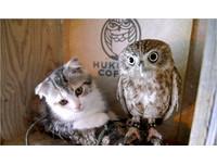 貓頭鷹用母愛溫暖小貓 跨物種之愛融化冰冷的心