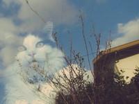 日天空現異相?一張「貓雲」照網友瘋傳