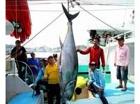 「第一鮪」180公斤被釣進港! 屏東黑鮪魚季正式開跑