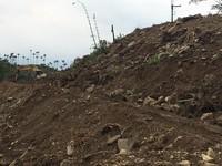螢火蟲悲歌...古坑蛇皇洞林地遭濫墾1公頃 最高罰30萬