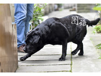 「狗拿耗子」真的多管閒事?黑拉拉連抓5年老鼠變犬明星